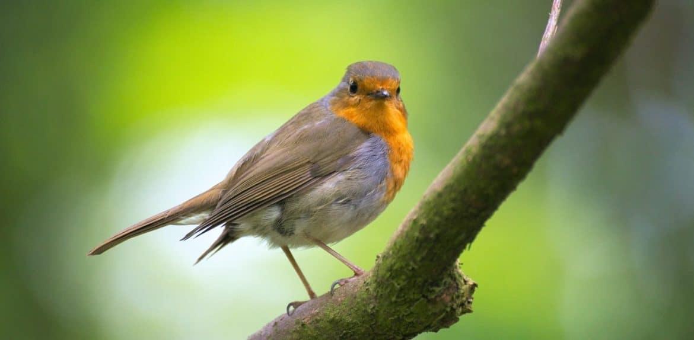 Is Yarn safe for birds?